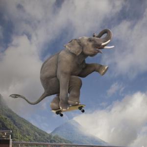 elefant-skateboard-art.co.uk