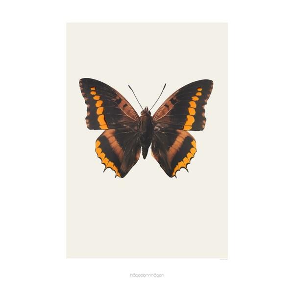 hagedornhagen-ks1-sommerfugl-butterfly-kobber-copp.jpg
