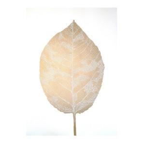 monika_petersen_leaf_gold_guld__hite_hvid.jpg